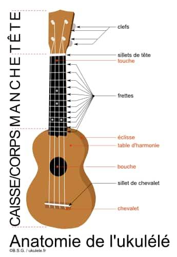 ukulele manche  corps